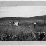 в полях усадьбы Воронино