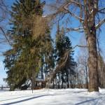 Беседка спрятались в мохнатых лапах ели. Коль южный склон на лыжах вы преодолели, то лиственница путь укажет вам прямой, где отдохнуть вы сможете и обрести покой.